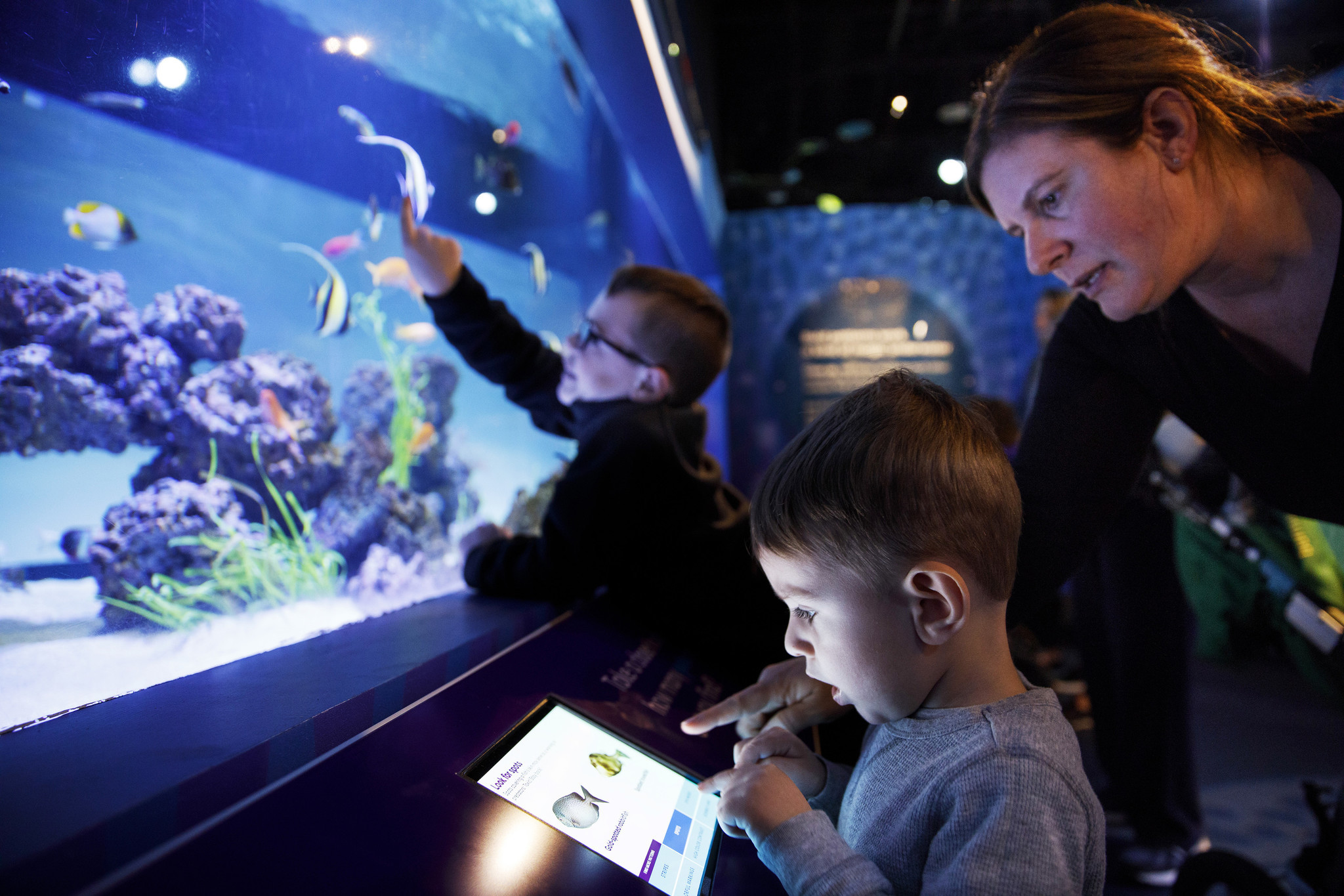 Underwater Beauty' at the Shedd is like a fantasy snorkeling trip on