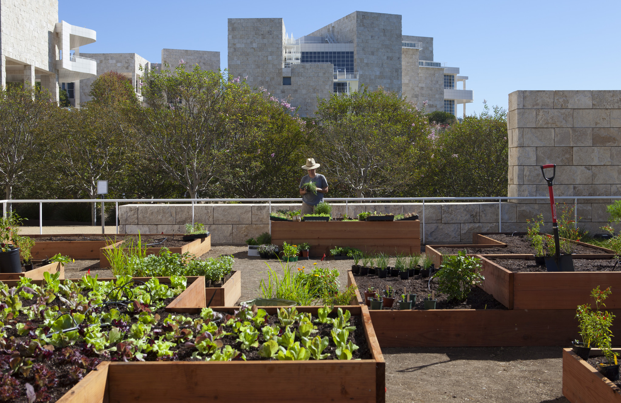 A salad grows at the Getty Center: Artist Julia Sherman on the roots ...