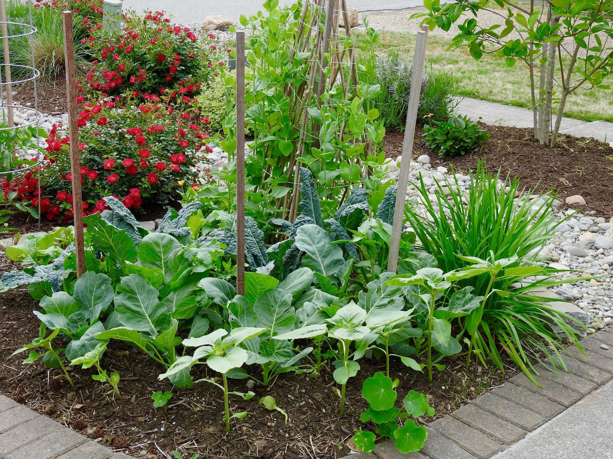 Vegetable Gardens What You Need To Know To Grow A Healthy One