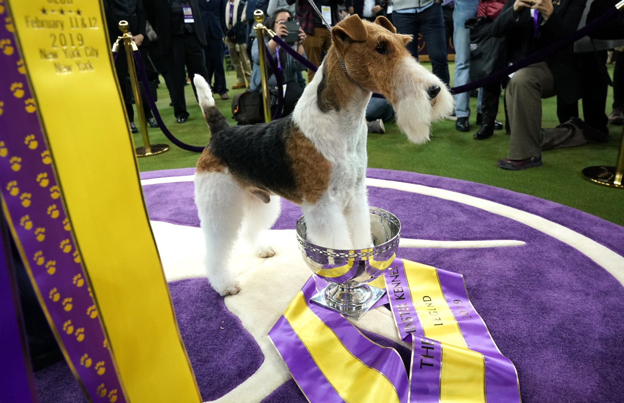 TV channels for Westminster Dog Show? Here's when and where