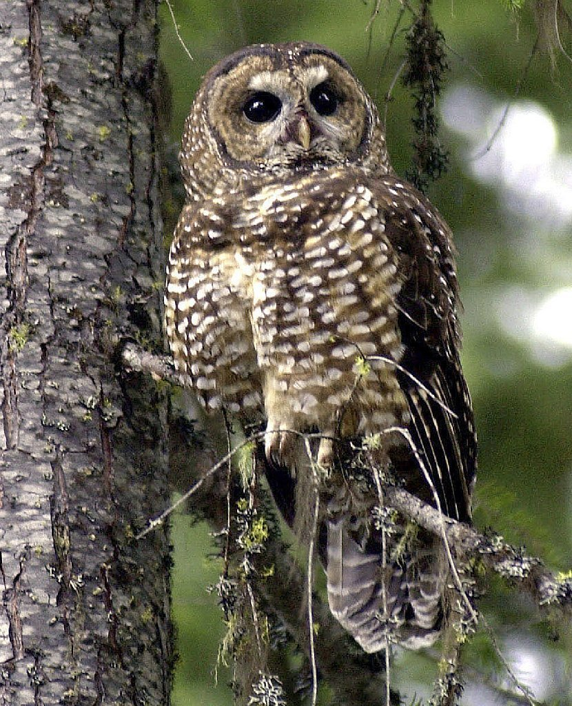 Why do some of us become owls, and others - larks 6