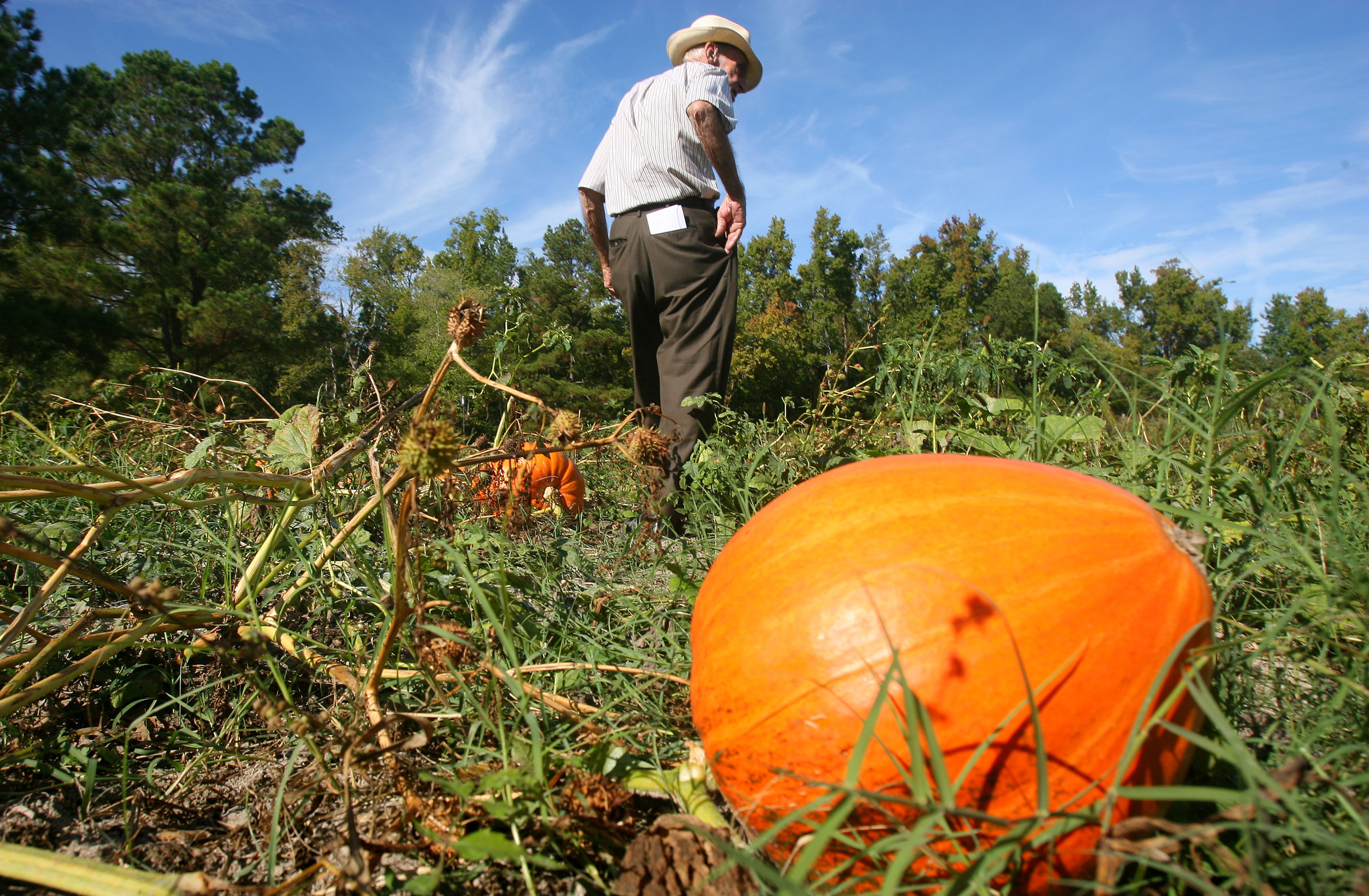 View Pumpkin Patch You Pick ~ Cutting File Image